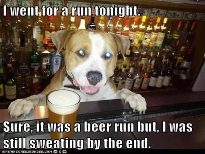 """27 Funny Animal Memes - """"I went for a run tonight. Sure, it was a beer run but, I was still sweating by the end."""""""