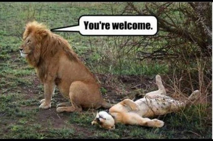 """27 Funny Animal Memes - """"You're welcome."""""""