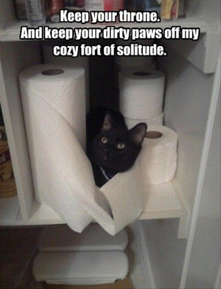 """27 Funny Animal Memes - """"Keep your throne. And keep your dirty paws off my cozy fort of solitude."""""""