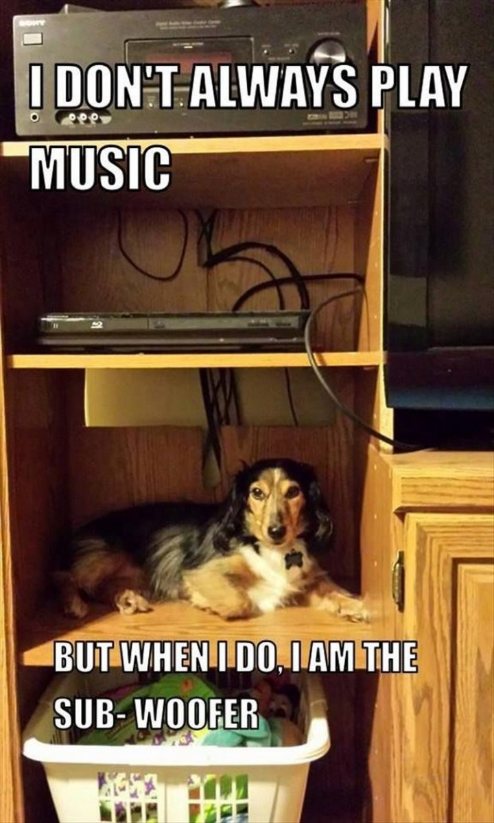 """27 Funny Animal Memes - """"I don't always play music. But when I do, I am the sub-woofer."""""""