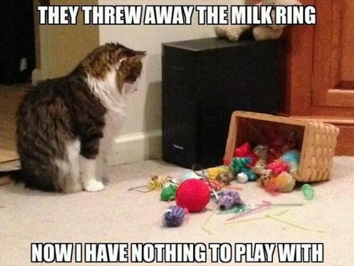 """27 Funny Animal Memes - """"They threw away the milk ring. Now I have nothing to play with."""""""