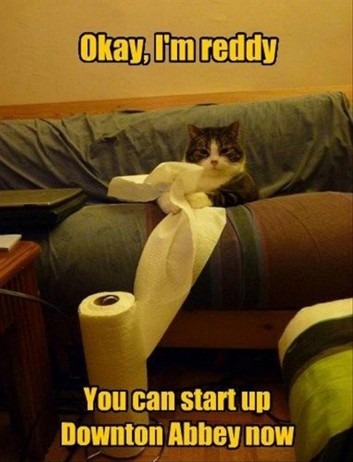 """27 Funny Animal Memes - """"Ok, I'm reddy. You can start up Downtown Abbey now."""""""
