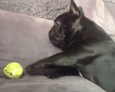 Funny Dog Fetch Fails of Dogs Hilariously Bad at Catching and Fetching.