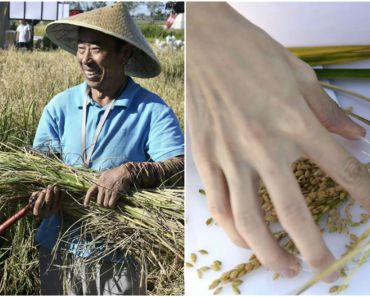 Chinese Scientists Invent Rice That Can Grow in Salt Water.