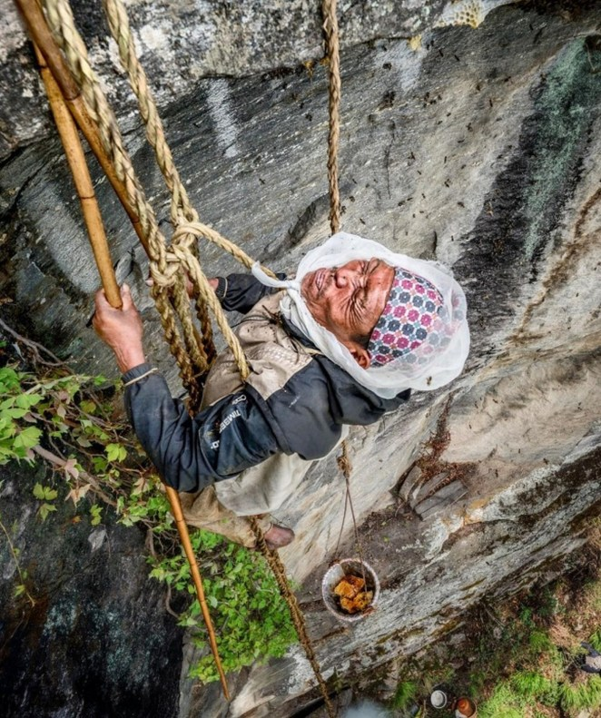 Honey hunter Maule Dhan coming back tocamp with beeswax after a honey hunt.