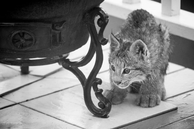 Look at those gorgeous lynx eyes!