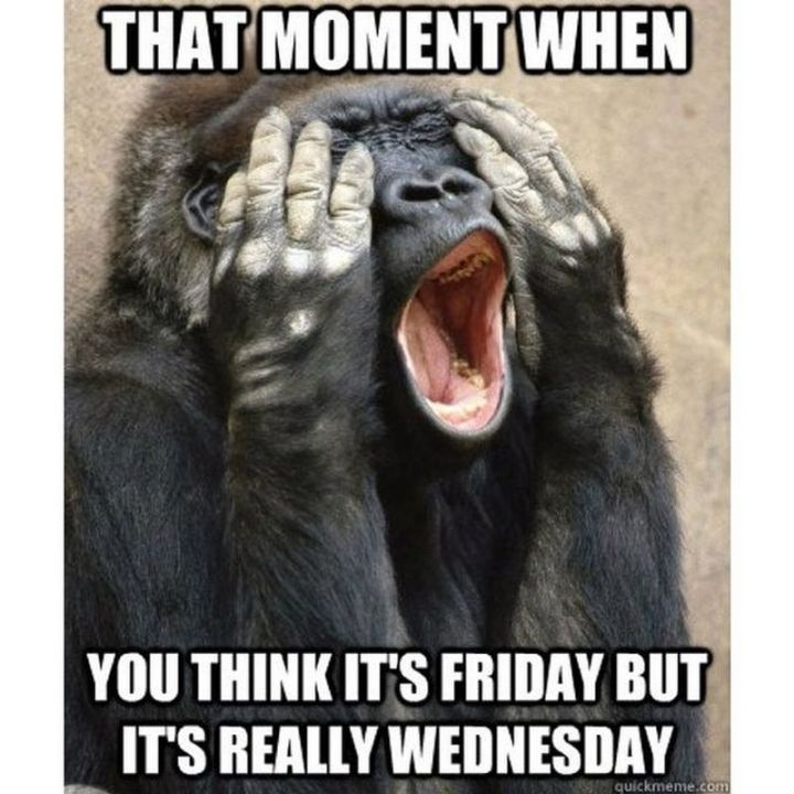 "15 Funny Wednesday Memes - ""That moment when you think it's Friday but it's really Wednesday."""