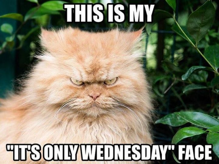"15 Funny Wednesday Memes - ""This is my ""It's only Wednesday"" face."""