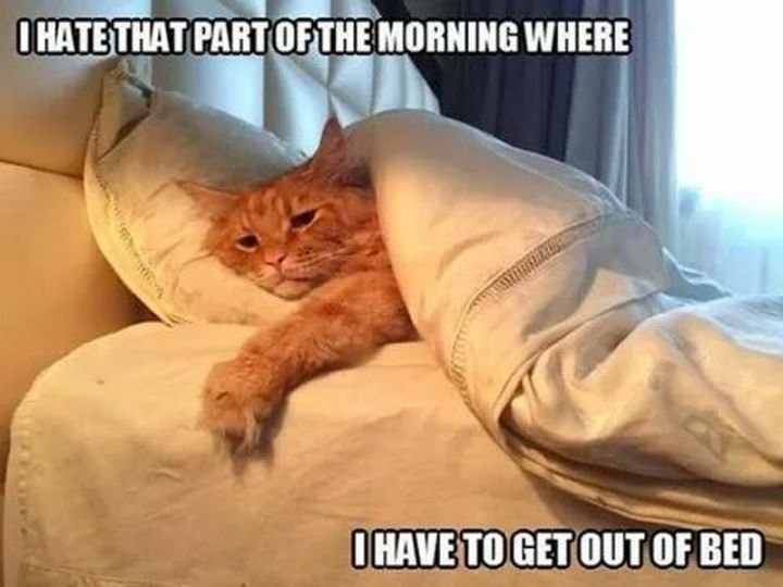 "55 Funny Cat Memes - ""I hate that part of the morning where I have to get out of bed."""