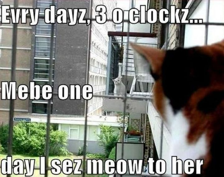 "55 Funny Cat Memes - ""Evry dayz, 3 o clockz...Mebe one day I sez meow to her."""