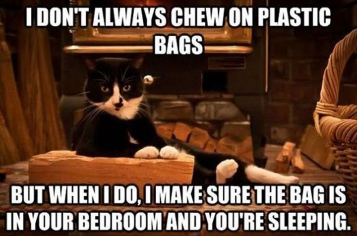 "55 Funny Cat Memes - ""I don't always chew on plastic bags but when I do, I make sure the bag is in your bedroom and you're sleeping."""