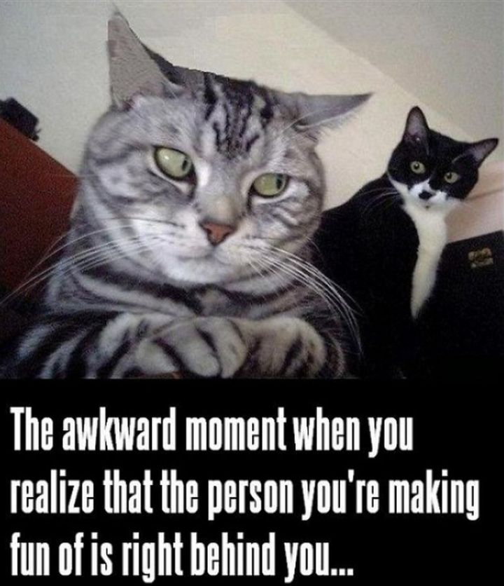 "55 Funny Cat Memes - ""The awkward moment when you realize that the person you're making fun of is right behind you."""