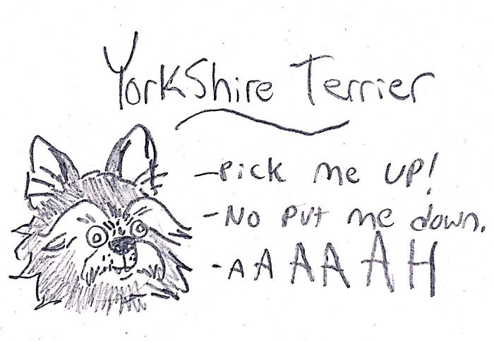 Funny Guide to Dog Breeds - Yorkshire Terrier.