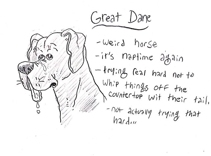 Funny Guide to Dog Breeds - Great Dane.