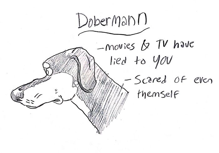 Funny Guide to Dog Breeds - Dobermann.