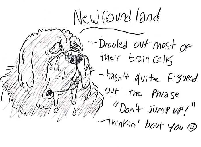 Funny Guide to Dog Breeds - Newfoundland.
