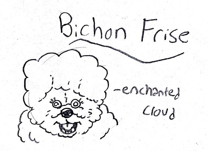 Funny Guide to Dog Breeds - Bichon Frise.