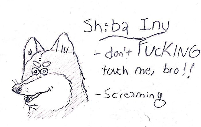 Funny Guide to Dog Breeds - Shiba Inu