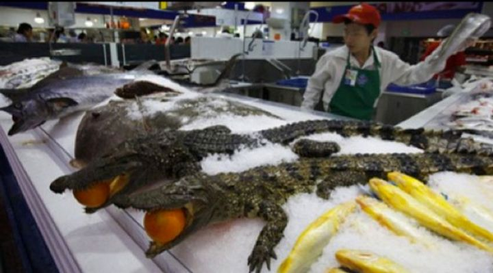 15 Items Sold at Walmart Stores in China - Crocodiles.