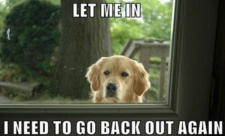 "101 best funny dog memes - ""Let me in. I need to go back out again."""