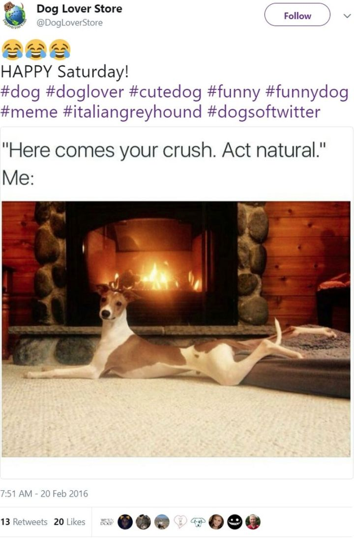 "101 best funny dog memes - ""Here comes your crush. Act natural."""