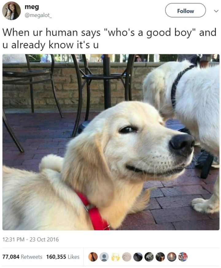 "101 best funny dog memes - ""When ur human says ""who's a good boy"" and u already know it's u."""