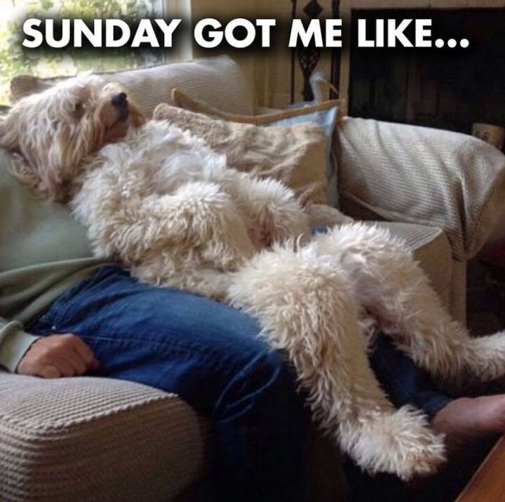 27 Funny Sunday Memes - This dog is my new spirit animal.