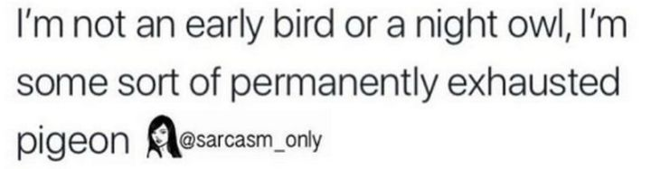 """37 Best Exhausted Memes - """"I'm not an early bird or a night owl, I'm some sort of permanently exhausted pigeon."""""""