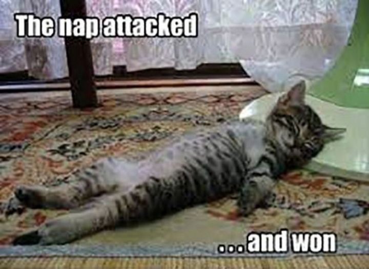 """37 Best Exhausted Memes - """"The nap attacked...and won."""""""