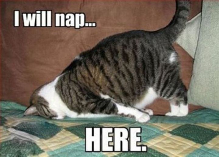 """37 Best Exhausted Memes - """"I will nap...here."""""""