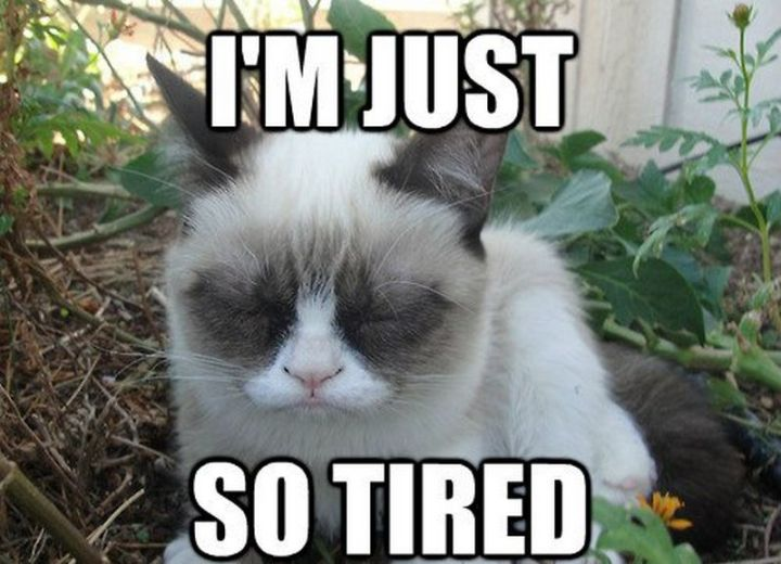 """37 Best Exhausted Memes - """"I'm just so tired."""""""