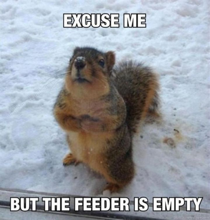 "55 Funny Winter Memes - ""Excuse me, but the feeder is empty."""