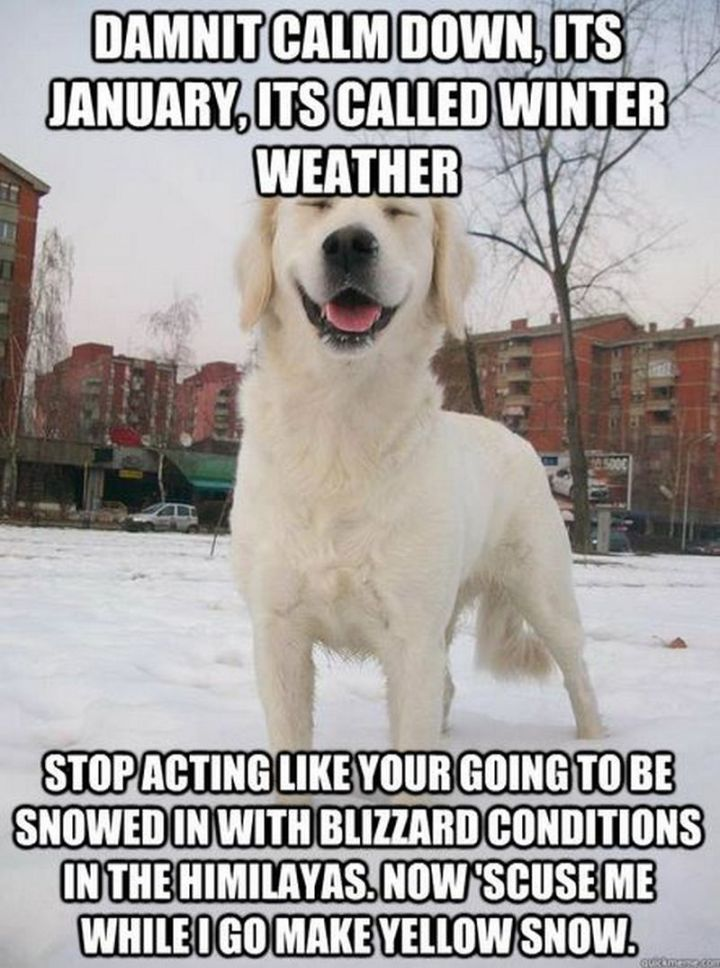 "55 Funny Winter Memes - ""Damnit calm down, it's January, it's called winter weather. Stop acting like your going to be snowed in with blizzard conditions in the Himalayas. Now 'scuse me while I go make yellow snow."""