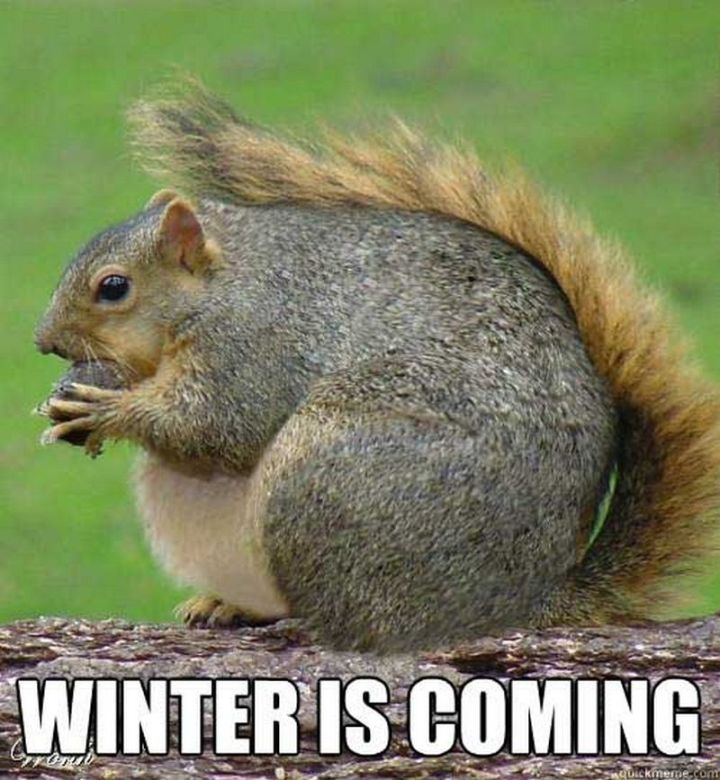 "55 Funny Winter Memes - ""Winter is coming."""