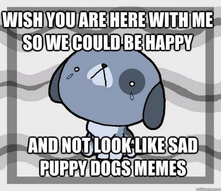 """101 I miss you memes - """"Wish you are here with me so we could be happy and not look like sad puppy dog memes."""
