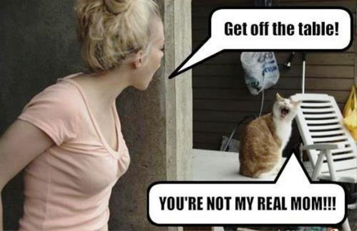 """101 Funny Mom Memes - """"Get off the table! You're not my real mom!!!"""""""