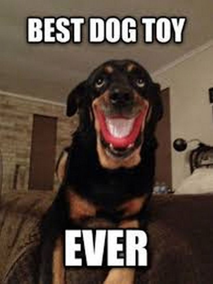 "101 Smile Memes - ""Best dog toy ever."""