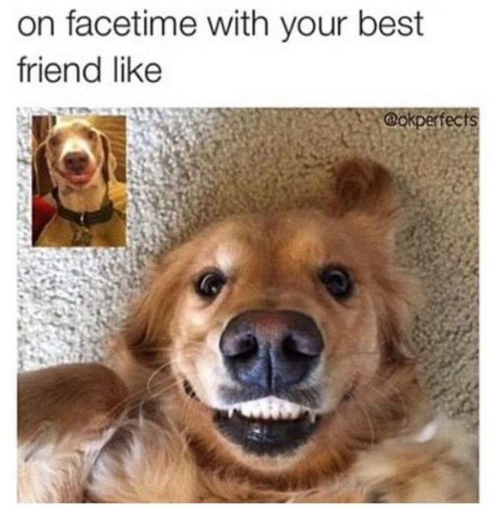 "65 Funny Friend Memes - ""On facetime with your best friend like."""