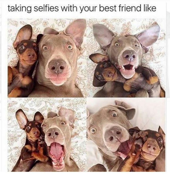 """Taking selfies with your best friend like..."""