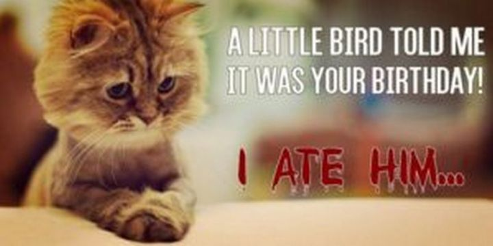 "101 Funny Cat Birthday Memes - ""A little bird told me it was your birthday! I ate him..."""