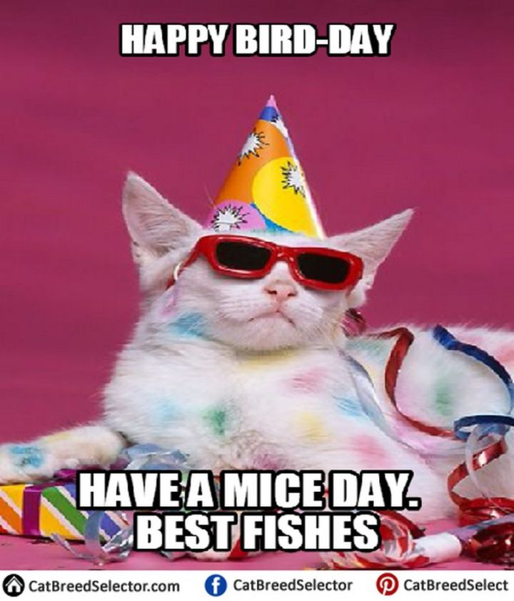 "101 Funny Cat Birthday Memes - ""Happy Bird-day. Have a mice day. Best fishes."""