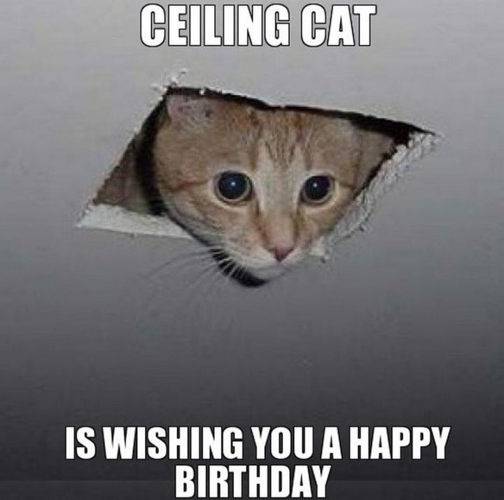 "101 Funny Cat Birthday Memes - ""Ceiling cat is wishing you a happy birthday."""