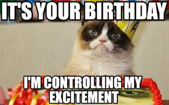 "101 Funny Cat Birthday Memes - ""It's your birthday. I'm controlling my excitement."""