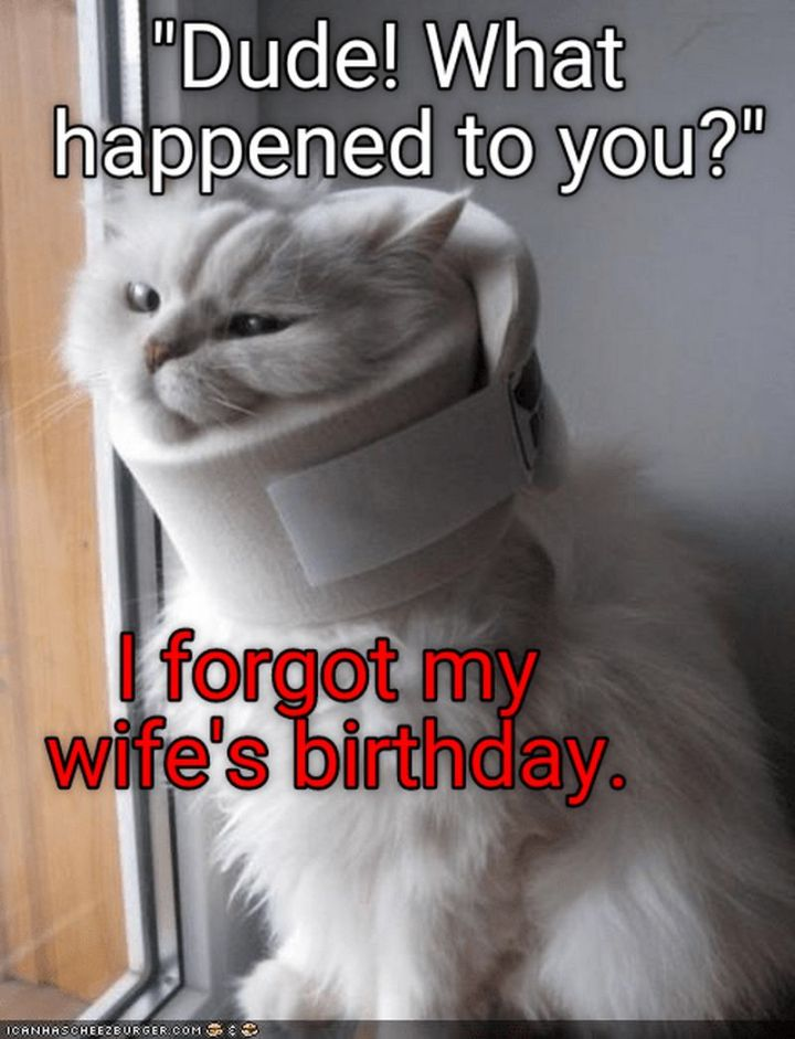 "101 Funny Cat Birthday Memes - ""'Dude, what happened to you' I forgot my wife's birthday."""