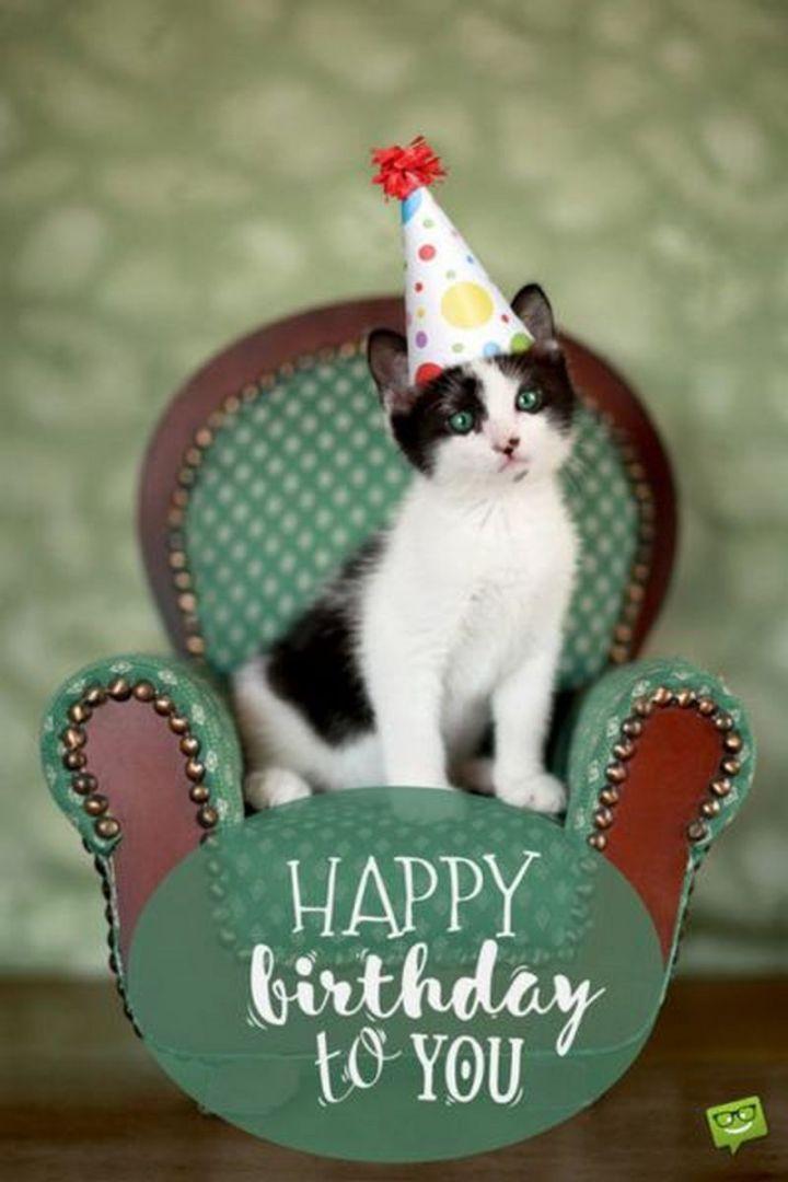 "101 Funny Cat Birthday Memes - ""Happy birthday to you."""