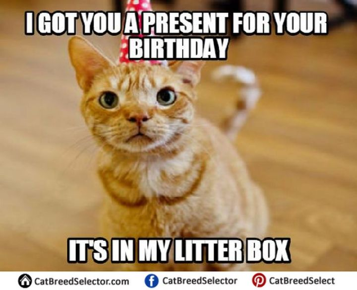 "101 Funny Cat Birthday Memes - ""I got you a present for your birthday. It's in my litter box."""