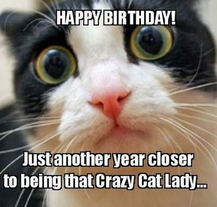 "101 Funny Cat Birthday Memes - ""Happy birthday! Just another year closer to being that Crazy Cat Lady..."""