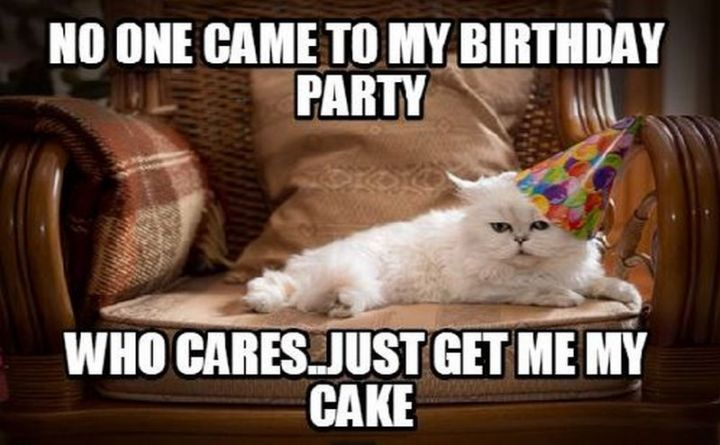"101 Funny Cat Birthday Memes - ""No one came to my birthday party. Who cares...just get me my cake."""
