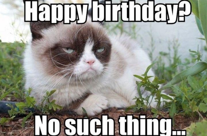 "101 Funny Cat Birthday Memes - ""Happy birthday? No such thing..."""