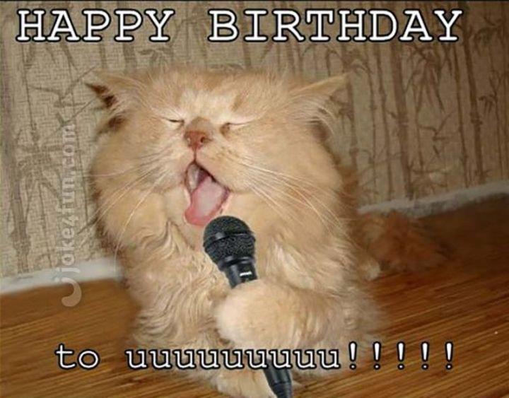 "101 Funny Cat Birthday Memes - ""Happy birthday to uuuuuuuuu!!!!!"""